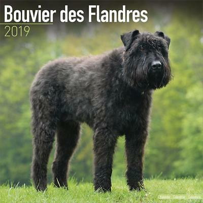 Bouvier des Flandres 2019 Dog Calendar 15% OFF MULTI ORDERS