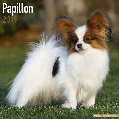 Hund Papillon Great Water Playing With Water Dog Papillon Spitz Ads