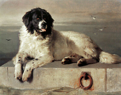 Newfoundland Dog Sir Edwin Landseer Limited Edition Print #20/500 Mint!