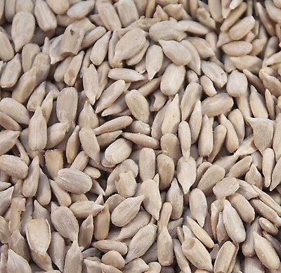 Maltbys' Stores 20Kg Sunflower Hearts For Wild Birds The Uk's Trusted Brand Si