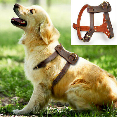 Genuine Leather Dog Harness For Medium Large Breeds Rottweiler Bulldog Pit Bull