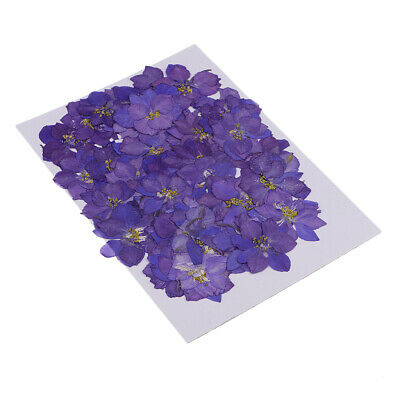 50x Pressed Natural Dried Flowers Delphinium for Candle Making Decor Purple