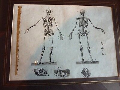 Pair Antique Anatomical Medical Framed Book Plates 19Th Century C.1809, Skeleton