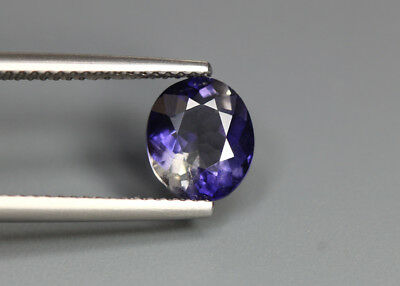 1.45 Cts_Glittering !! Top Luster_100 % Natural Purplish Blue Iolite_Sri Lanka