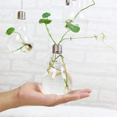 Transparent Light Bulb Vase Glass Flower Plant Hanging Water Bottle Home Office  sc 1 st  PicClick & TRANSPARENT LIGHT BULB Vase Glass Flower Plant Hanging Water Bottle ...