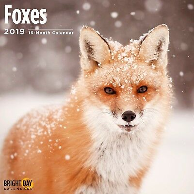 Foxes 2019 Wall Calendar Nature Beautiful Photography Animal Cute Gift