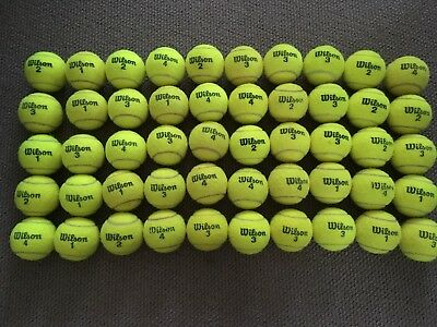 50 Used Wilson Australian Open Tennis Balls for Dogs and Backyard Games