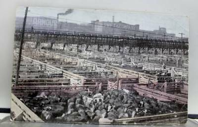 Illinois IL Chicago Union Stock Yards Postcard Old Vintage Card View Standard PC
