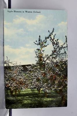 Scenic Western Orchard Apple Blossoms Postcard Old Vintage Card View Standard PC