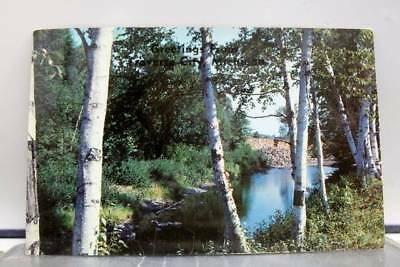 Scenic Creek in Wood Postcard Old Vintage Card View Standard Souvenir Postal PC