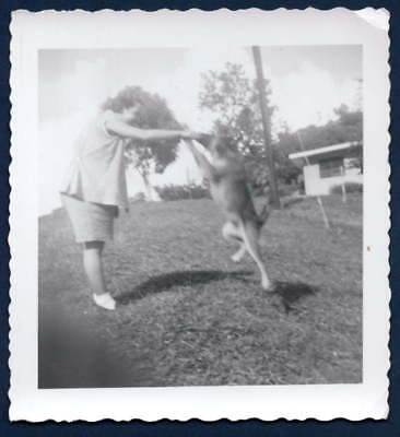 Dog Jumps For Treat Old/vintage Photo-Snapshot-C6
