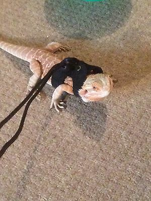 BEARDED DRAGON REPTILE Harness Lead/leash - £5.00 | PicClick UK