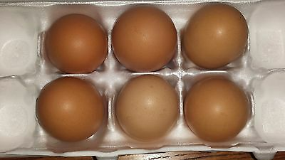 8 Fertile Chicken Hatching Eggs Assorted Poultry Barn Yard Mix Priority Shipping