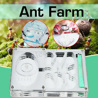 Ant Farm Educational Science Project Insect Nest Maze LIVE Ants Feeding Box