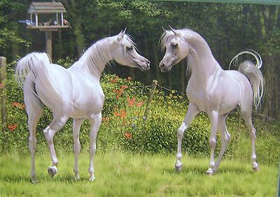 New Matted Gray Arabian Horse Print Stallion Mare Mary Haggard