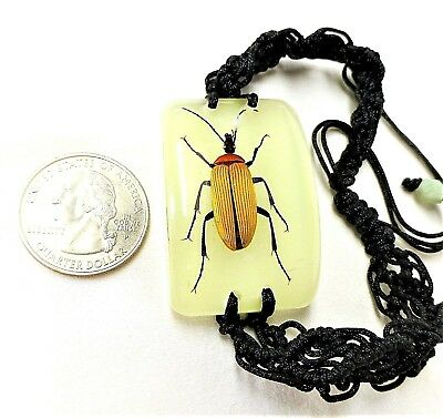 Red Scarf Beetle Insect Bracelet in Resin Specimen Collection