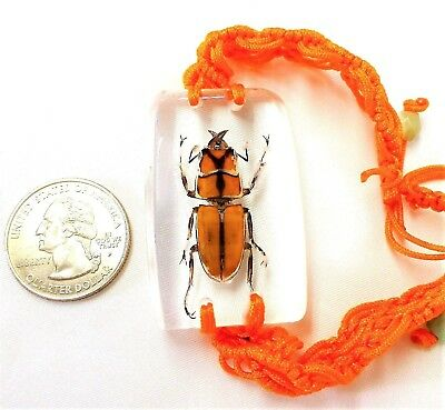 Yellow Beetle Insect Bracelet in Resin Specimen Collection