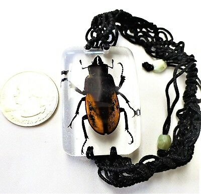 Two-tone Beetle Insect Bracelet in Resin Specimen Collection