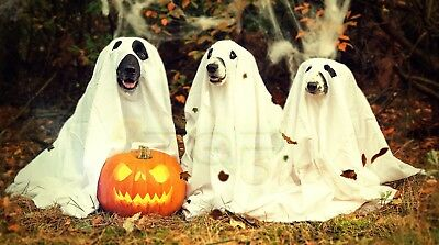 Digital Picture Image Photo Best Wallpaper Desktop Background Ghost Dogs JPG