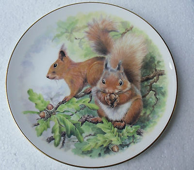 Lovely Red Squirrel Plaque