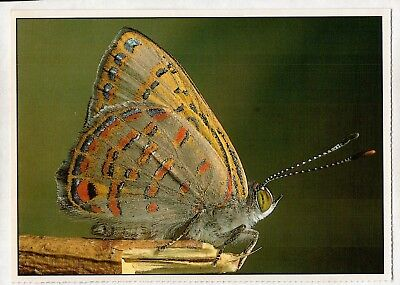 C2113pac Insects Butterfly Dull Jewel postcard