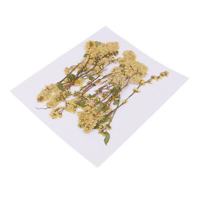 20pcs Pressed Yellow Real Dried Flower for Candle Making DIY Ornament 4-10cm