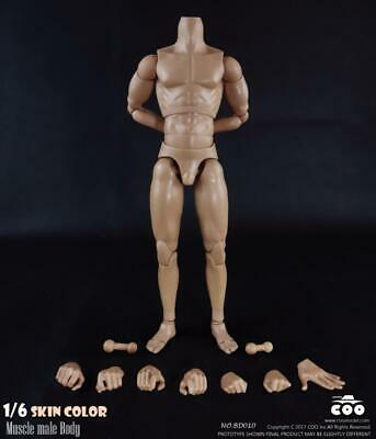 COOMODEL COO 1/6 scale Standard Muscular Arm Male Body (25cm tall) BD007