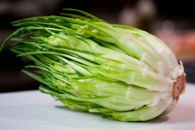 Chicory Puntarelle 100 Seeds