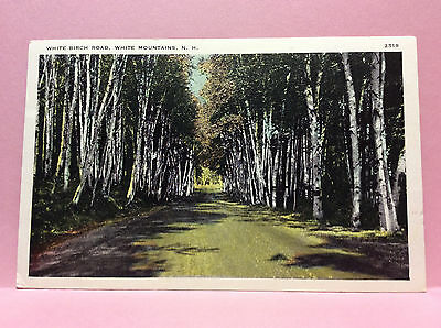White Birch Rd White Mtns New Hampshire Vtg Postcard Posted 1941 Rumney Depot