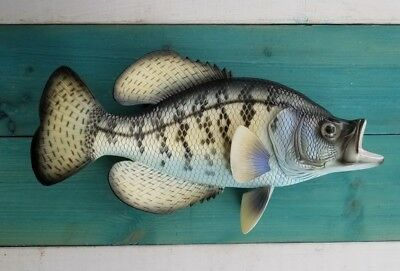 "Crappie Hand Painted 15"" Replica Wall Mount 3-D Fishing Decor Gift Fresh Water"