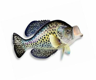 Handpainted Small Dot Crappie Wall Mount Decor Plaque Game Fish Replica 15""