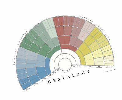 treeseek family tree wall poster fan chart large colored blank