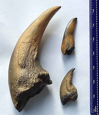 Jurassic park T REX Fossil Dinosaur Claws + Teeth set