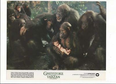 Greystoke The Legend Of Tarzan Lord Of The Apes, Movie Poster 8 X 10