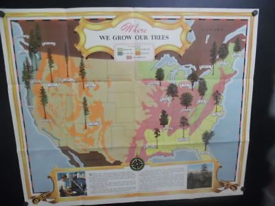 1943 Where We Grow Our Trees Pictorial Map American Forest Products Industries