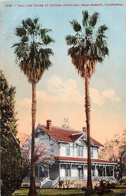 Fresno California Tall Pan Palms At Butler Vineyard~Edward Mitchel Postcard 1909
