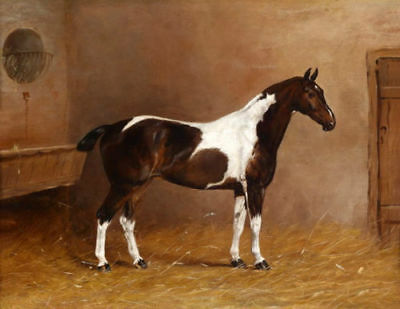 CHENPAT568 rare white horse with dog hand painted oil painting art on canvas