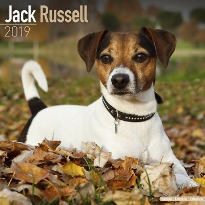 Calendrier Jack russell 2019