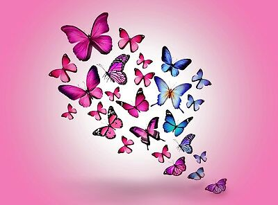 Butterflies - Cute Colourful Pink Large Poster / Canvas Picture Prints