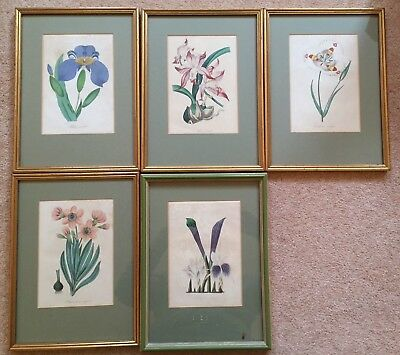 Antique 19th Century Hand Coloured Botanical Flower Prints Collection Rare