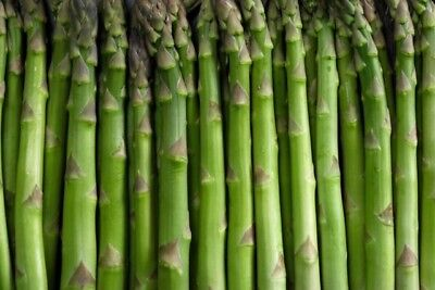 ASPARAGUS 'Mary Washington' 25 seeds  vegetable HEIRLOOM