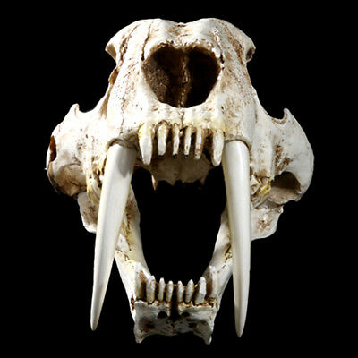 1:1 Saber-Toothed Tiger Resin Skull Replica Collection Head Model Home Decor