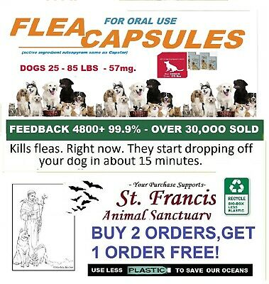 Equal To CapGuard LARGE 12 capsules Flea Treatment St. Francis Rescue 8000+ sold