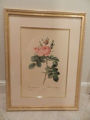 Pair Of 1828 Antique Large Folio French Remond Rose Floral Lithographs Rare!!