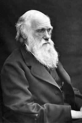 New 4x6 Photo: Charles Darwin - English Naturalist, Geologist and Biologist