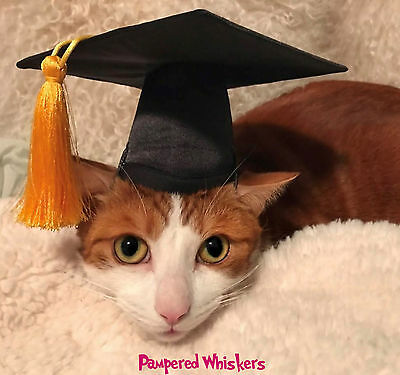 """Cat Graduation cap/hat for cats or small sized dogs with 6-11"""" collar size"""