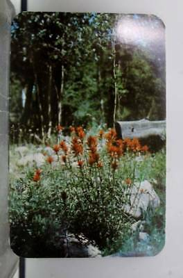 Wyoming WY Indian Paint Brush Flower Postcard Old Vintage Card View Standard PC