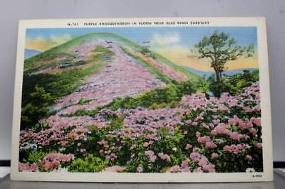 Scenic Blue Ridge Parkway Purple Rhododendron Postcard Old Vintage Card View PC