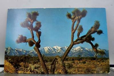 Scenic Joshua Tree Postcard Old Vintage Card View Standard Souvenir Postal Post