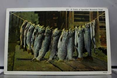 Scenic Fishing Speckled Mountain Trout Postcard Old Vintage Card View Standard
